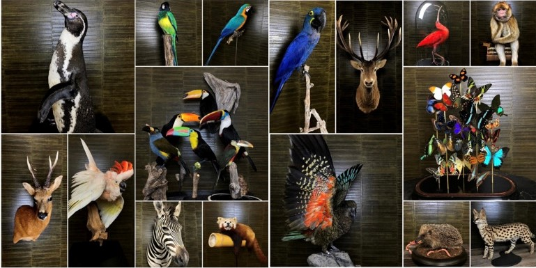 Taxidermie By Max